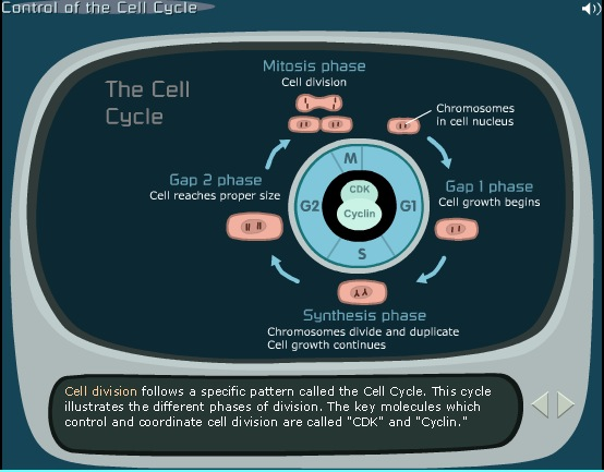 Control of the Cell Cycle: Preparing to Play