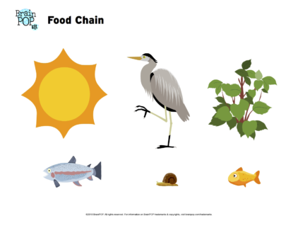 Use The Organisms To Make A Food Web