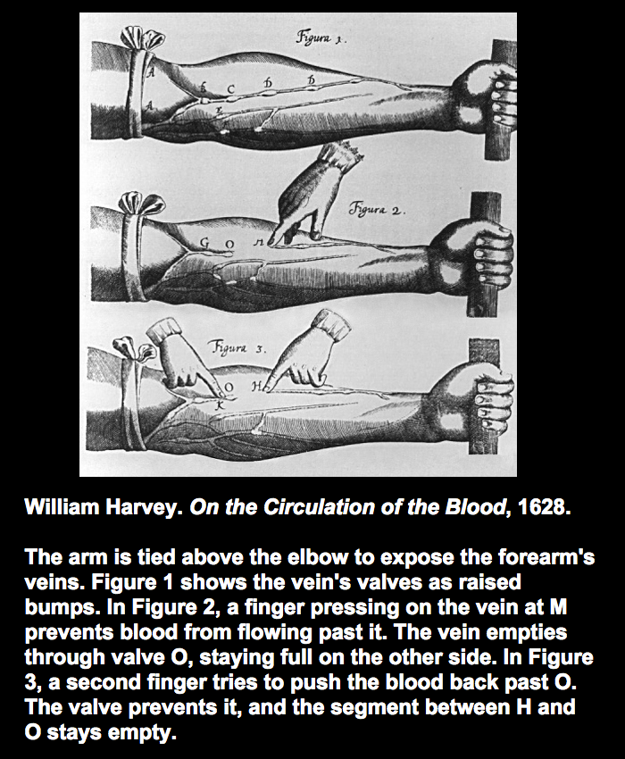 William_Harvey.__i_On_the_Circulation_of_the_Blood__i___1628._br__br_The_arm_is_tied_above_the_elbow_to_expose_the_forearm_s_veins._Figure_1_shows_the_vein_s_valves_as_raised_bumps._In_Figure_2__a_finger_pressing_on_the_vein_at_M_prevents_b