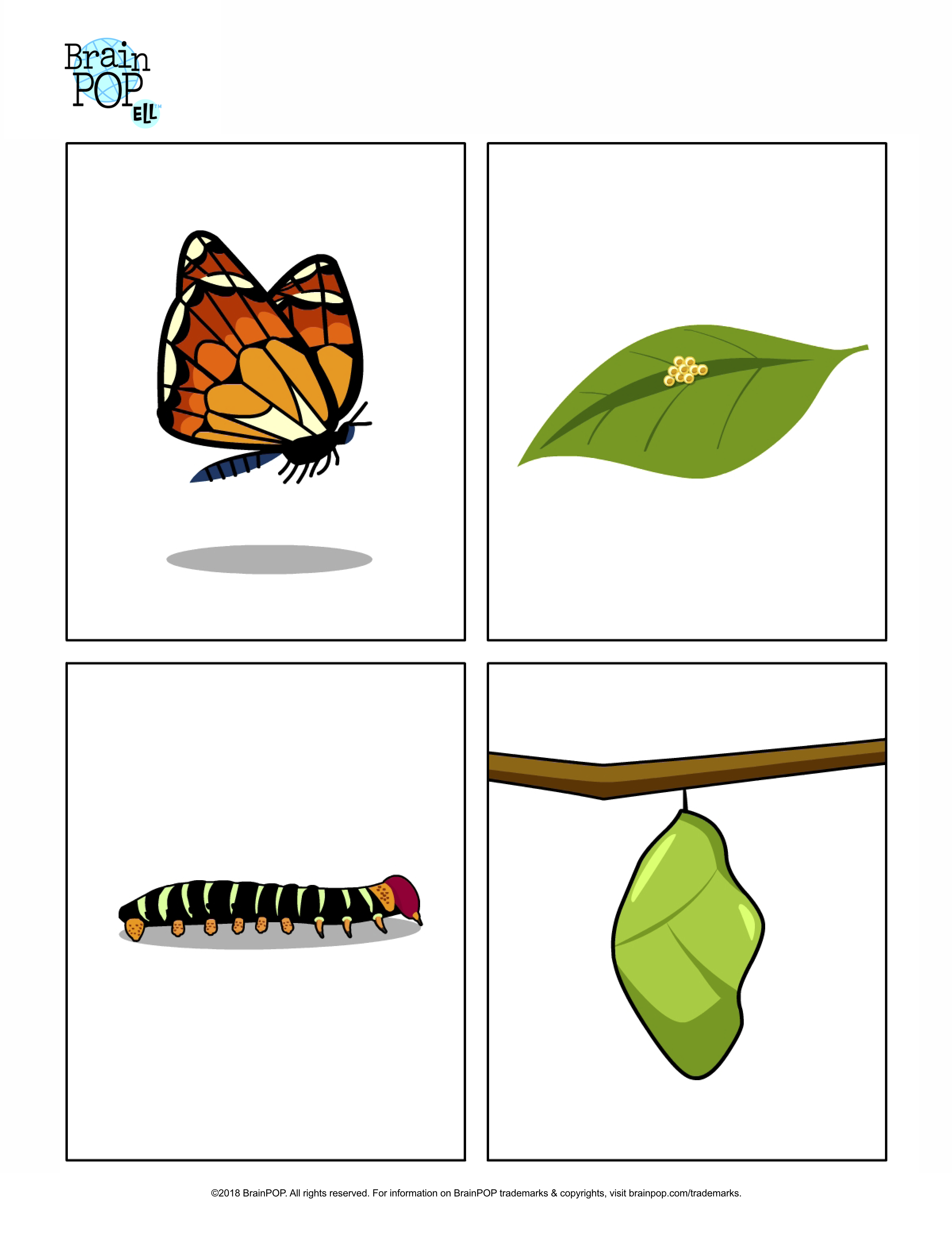 image regarding Butterfly Life Cycle Printable identify Butterfly Everyday living Cycle Pictures BrainPOP Educators