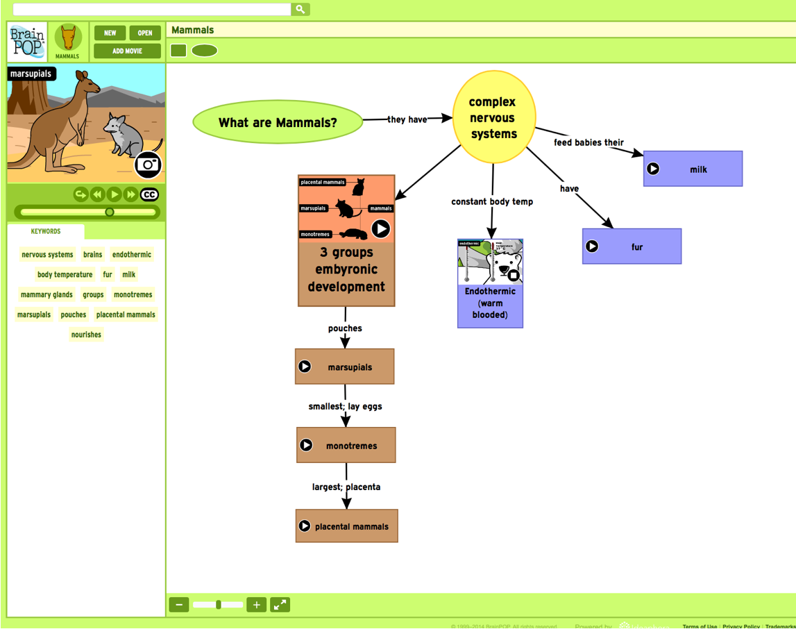 Mammals concept map created with Make-a-Map!