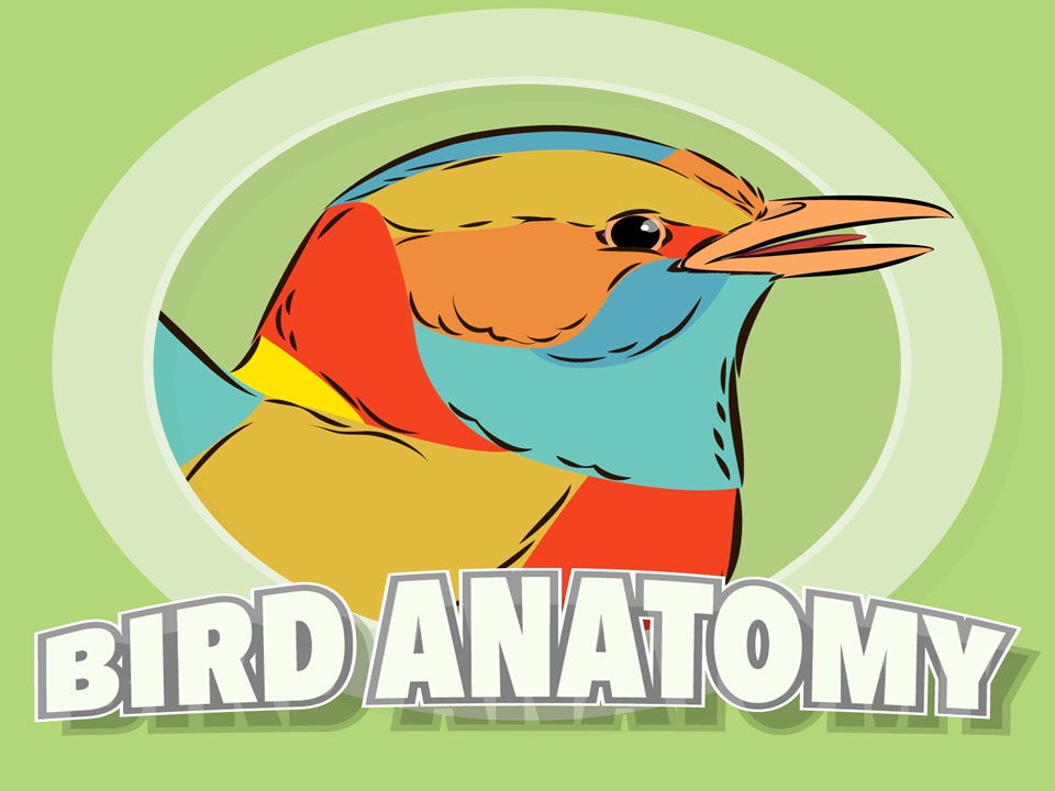 All About Bird Anatomy