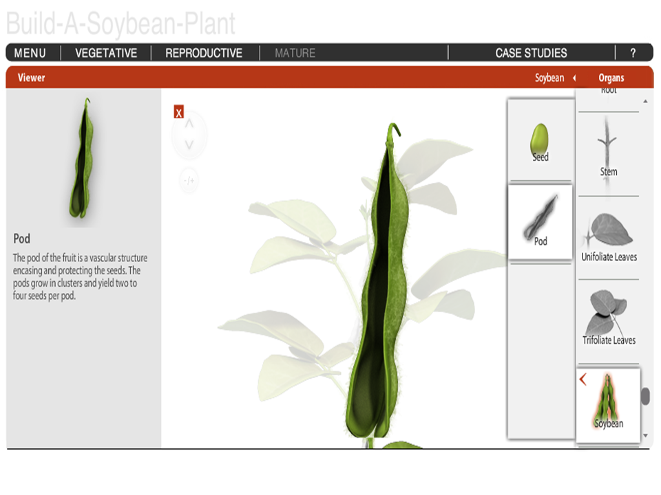 Build-A-Plant: Soybean
