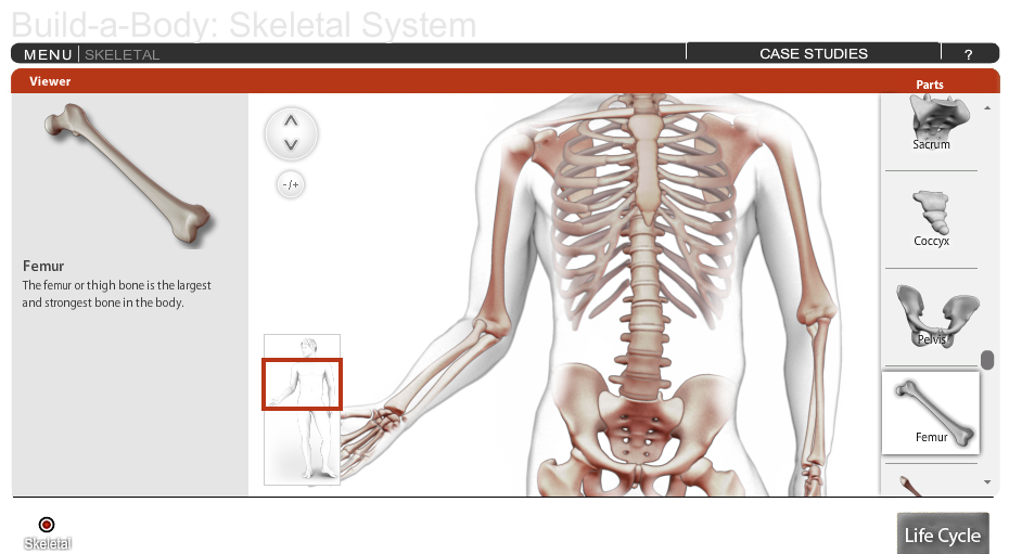 Build-A-Body: Skeletal System