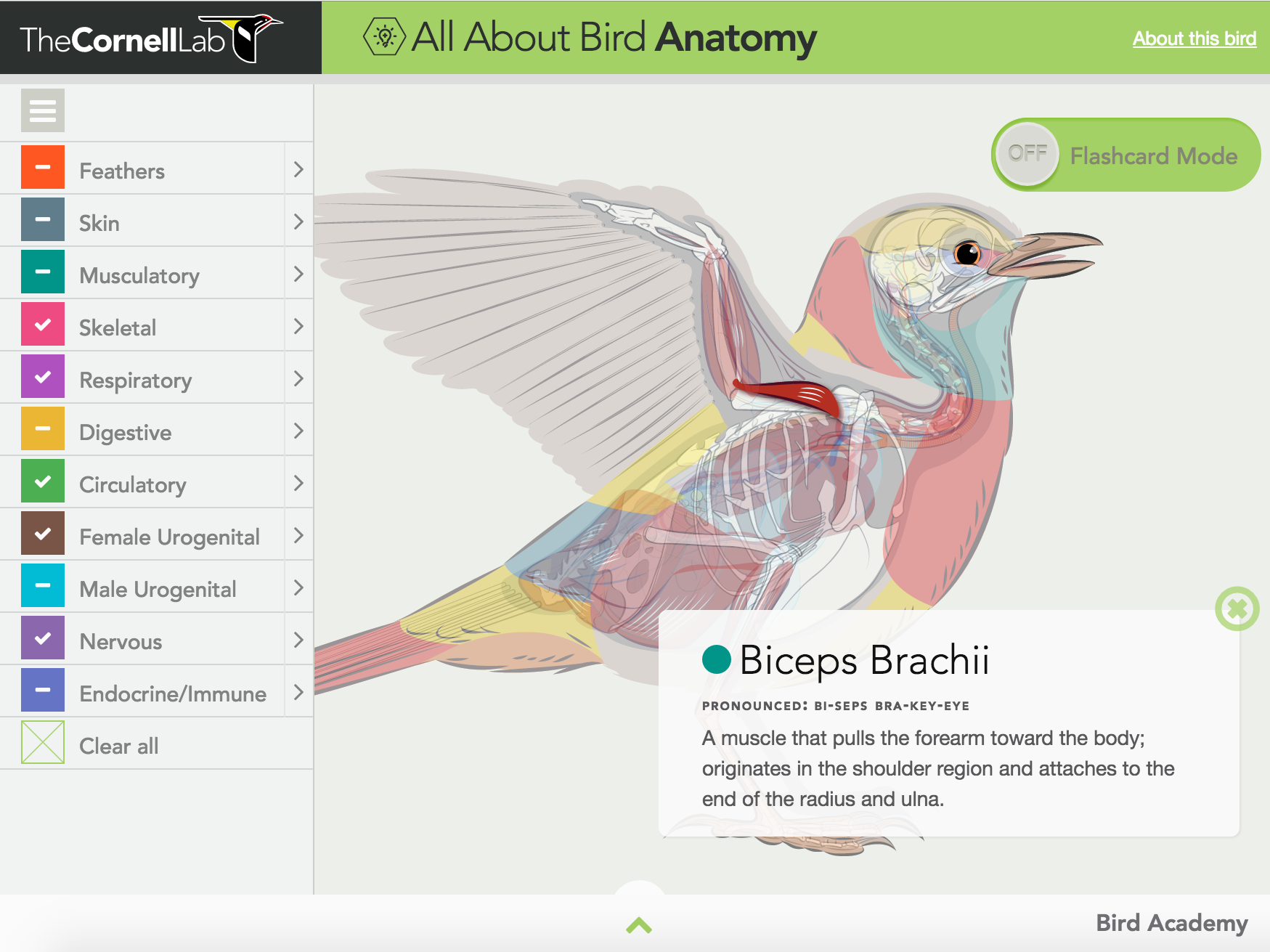 New on GameUp: All About Bird Anatomy