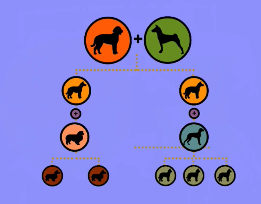 Student-Made Movie:  Dog Breeds